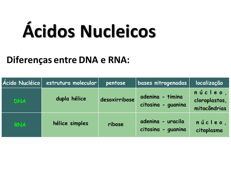 Diferenças entre DNA e RNA: