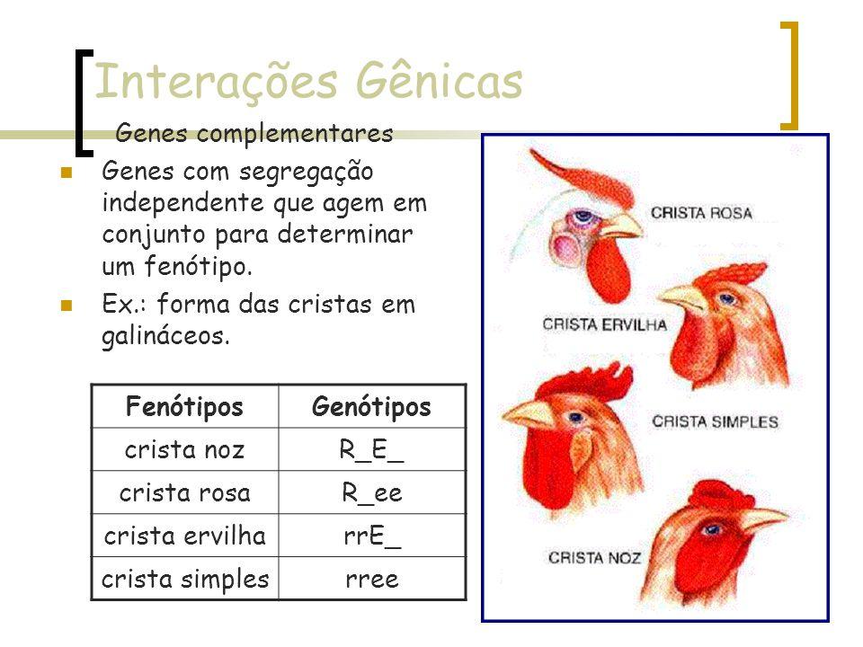 Interações Gênicas Genes complementares Genes com segregação independente que agem em conjunto para determinar um fenótipo. Ex.: forma das cristas em