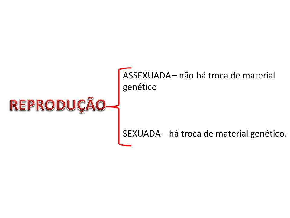 ASSEXUADA – não há troca de material genético SEXUADA – há troca de material genético.