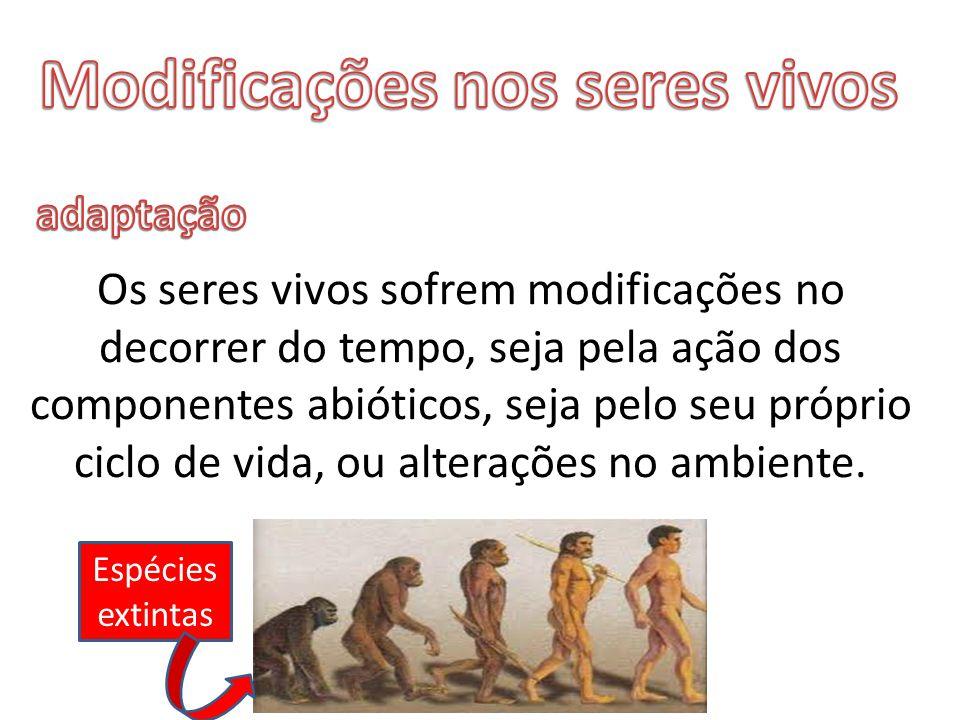 Os seres vivos sofrem modificações no decorrer do tempo, seja pela ação dos componentes abióticos, seja pelo seu próprio ciclo de vida, ou alterações