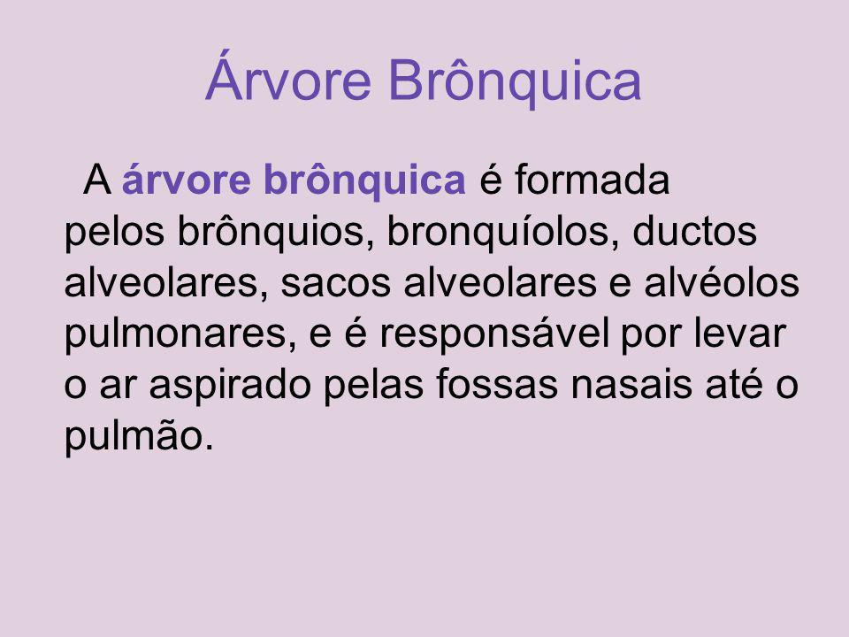 Árvore Brônquica A árvore brônquica é formada pelos brônquios, bronquíolos, ductos alveolares, sacos alveolares e alvéolos pulmonares, e é responsável