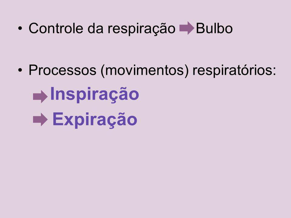 Controle da respiração Bulbo Processos (movimentos) respiratórios: Inspiração Expiração