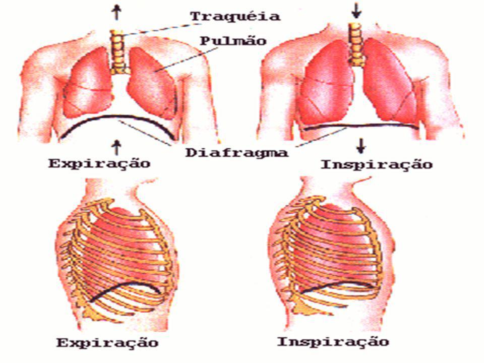 Hematose = Trocas Gasosas Ocorre nos alvéolos pulmonares; Ocorre uma difusão dos gases por diferença de concentração e, consequentemente, da pressão dos gases.