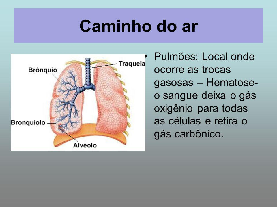 Caminho do ar Pulmões: Local onde ocorre as trocas gasosas – Hematose- o sangue deixa o gás oxigênio para todas as células e retira o gás carbônico.
