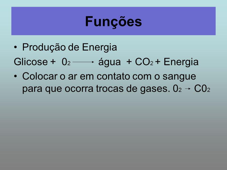 Funções Produção de Energia Glicose + 0 2 água + CO 2 + Energia Colocar o ar em contato com o sangue para que ocorra trocas de gases. 0 2 C0 2