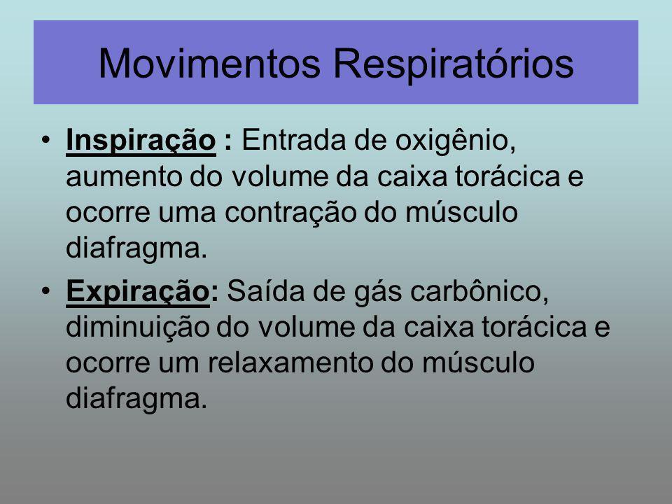 Inspiração : Entrada de oxigênio, aumento do volume da caixa torácica e ocorre uma contração do músculo diafragma. Expiração: Saída de gás carbônico,