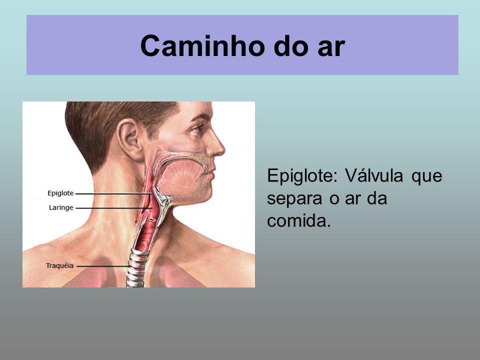 Caminho do ar Epiglote: Válvula que separa o ar da comida.