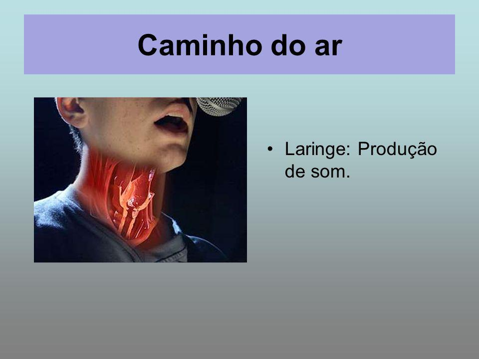 Caminho do ar Laringe: Produção de som.