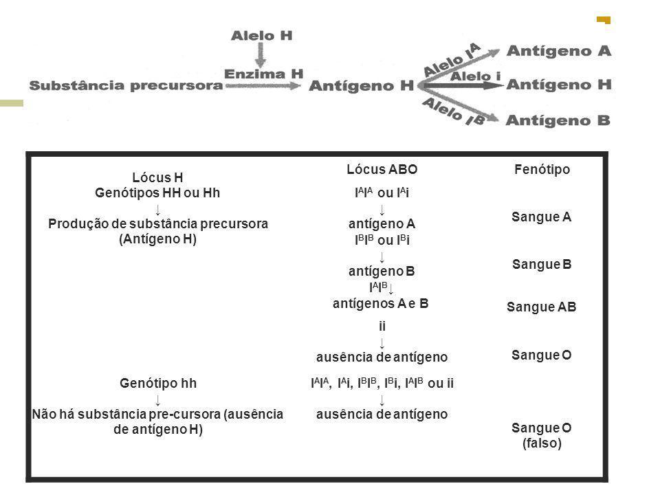 Lócus H Lócus ABOFenótipo Genótipos HH ou Hh Produção de substância precursora (Antígeno H) I A I A ou I A i antígeno A Sangue A I B I B ou I B i antí
