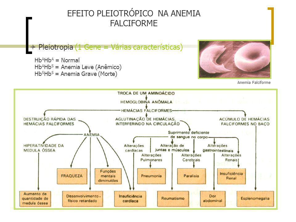 EFEITO PLEIOTRÓPICO NA ANEMIA FALCIFORME Pleiotropia (1 Gene = Várias características) Anemia Falciforme Hb A Hb A = Normal Hb A Hb S = Anemia Leve (A