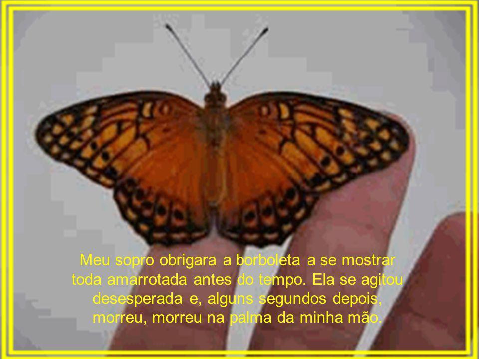 Meu sopro obrigara a borboleta a se mostrar toda amarrotada antes do tempo.