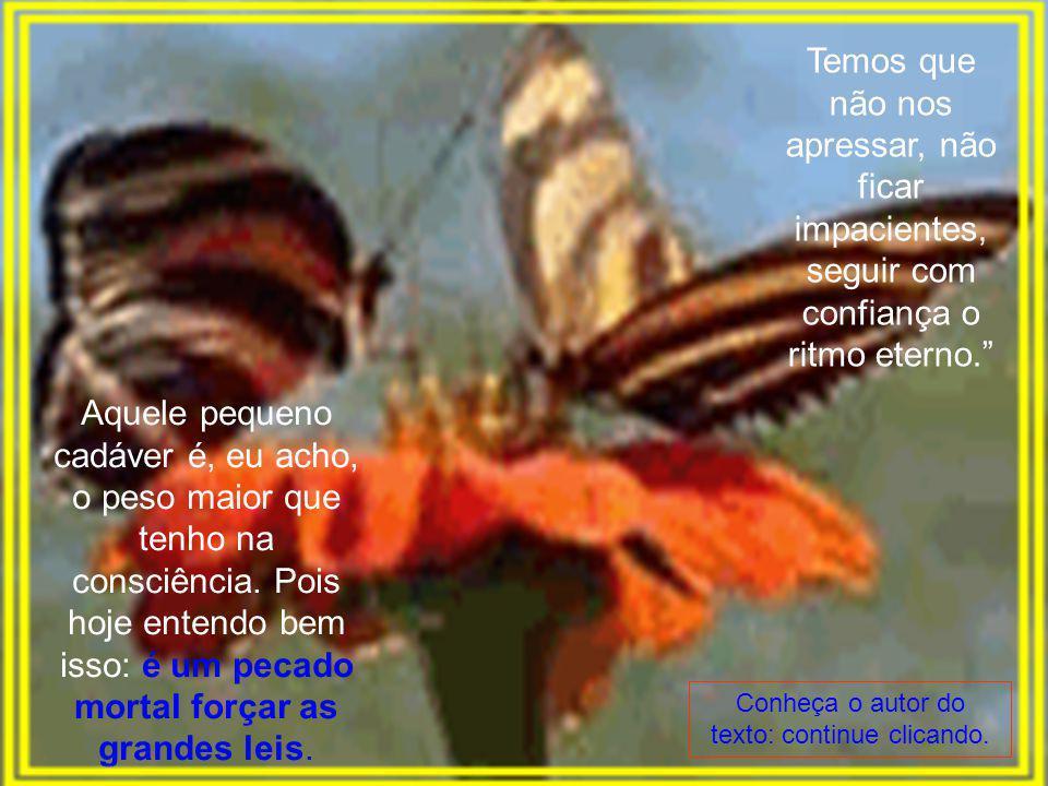 Meu sopro obrigara a borboleta a se mostrar toda amarrotada antes do tempo. Ela se agitou desesperada e, alguns segundos depois, morreu, morreu na pal