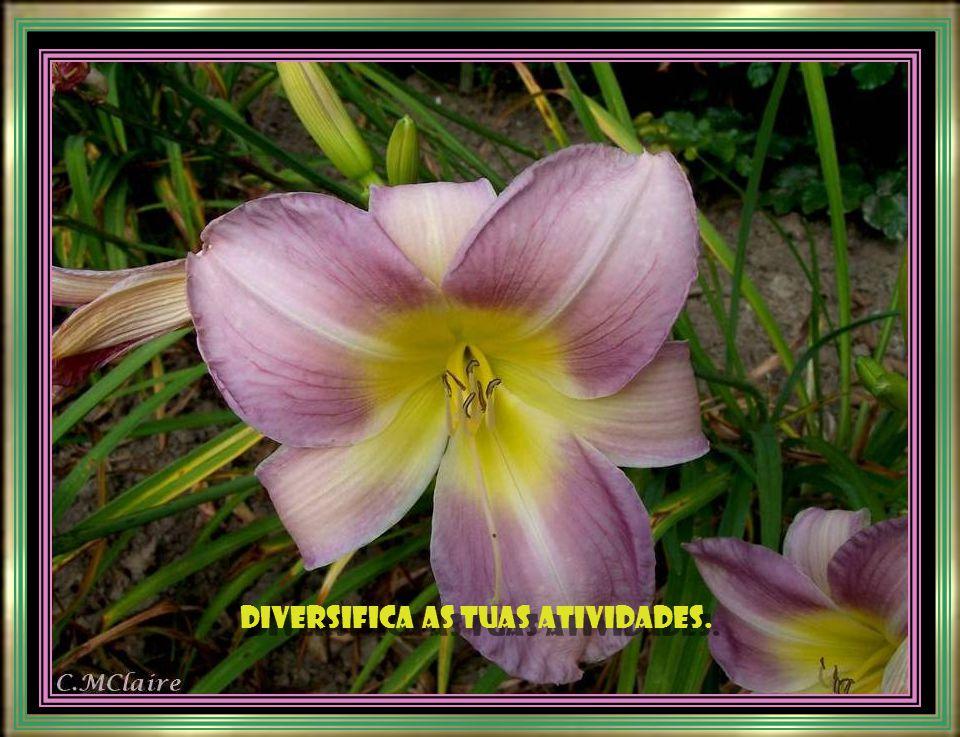 Diversifica as tuas atividades. Diversifica as tuas atividades.