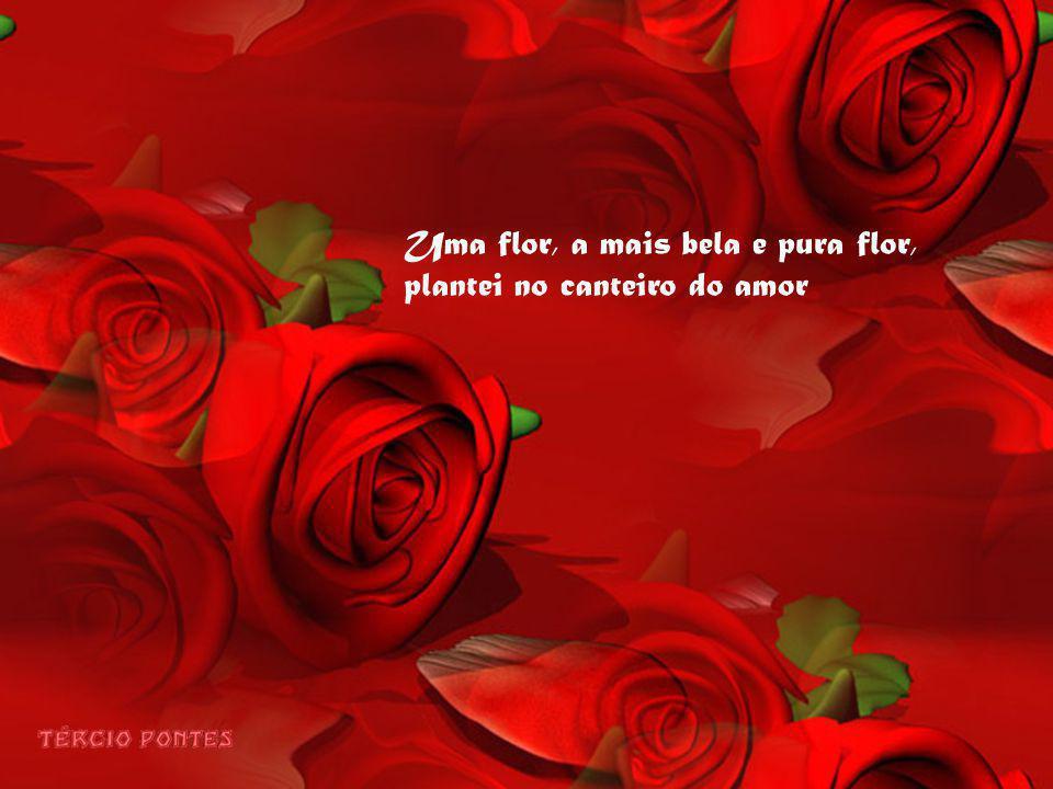 Uma flor, a mais bela e pura flor, plantei no canteiro do amor