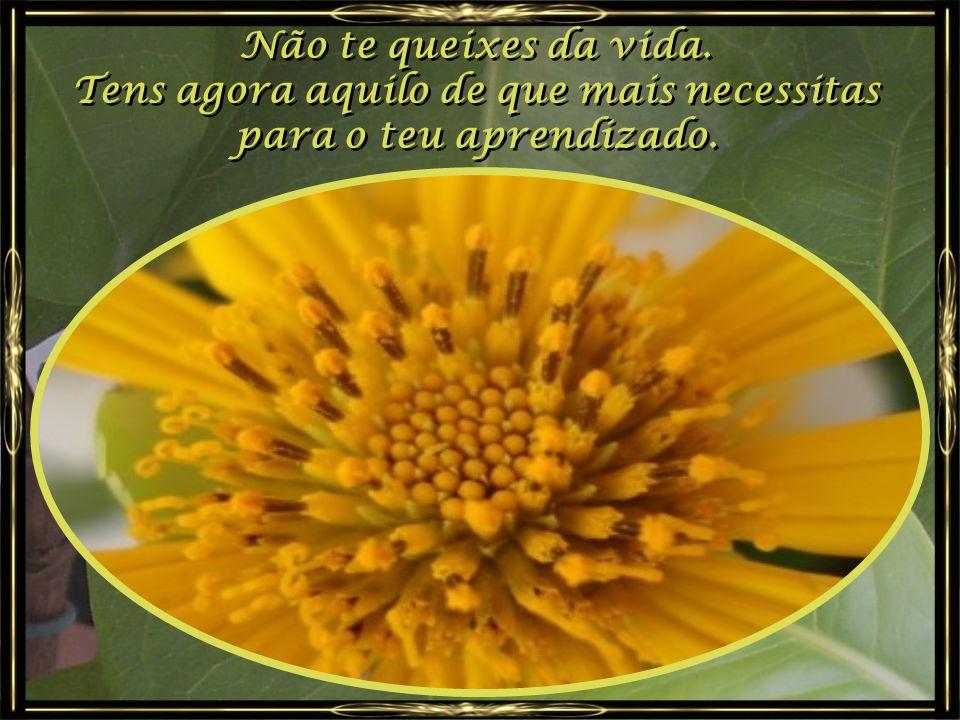 As abelhas fazem mel, colhendo o pólen das flores; As abelhas fazem mel, colhendo o pólen das flores; Os pássaros cantam, entretecendo os ninhos que o