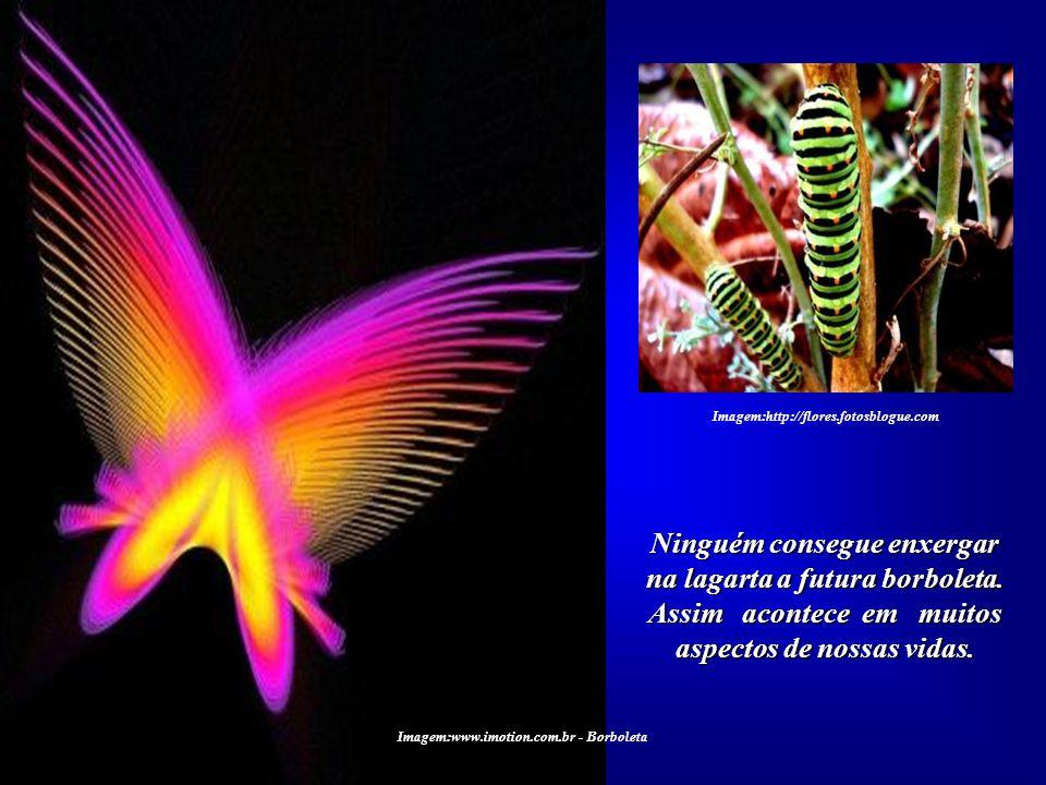 Imagem:www.imotion.com.br - Borboleta Imagem:http://flores.fotosblogue.com Todos ficam extasiados diante da beleza de uma borbo- leta. Mas não temos a