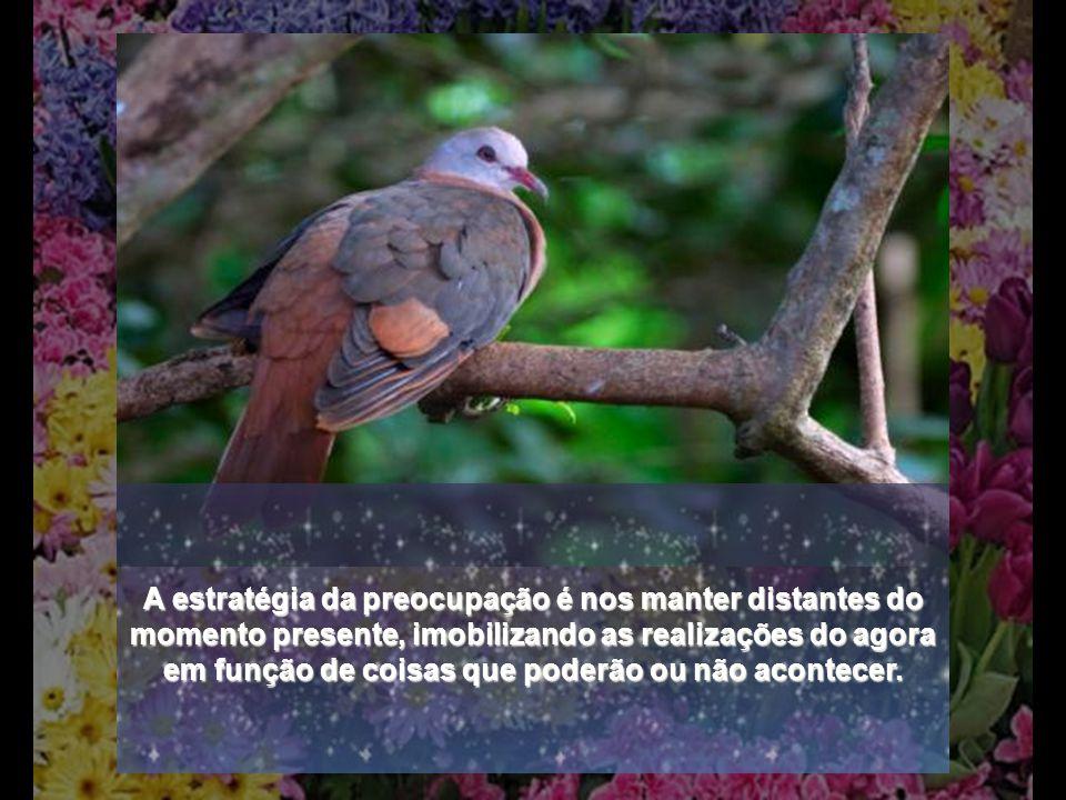 PRÉ-OCUPAÇÃO...observai os pássaros do céu: eles não semeiam nem colhem......observai como crescem os lírios dos campos: eles não trabalham nem fiam..