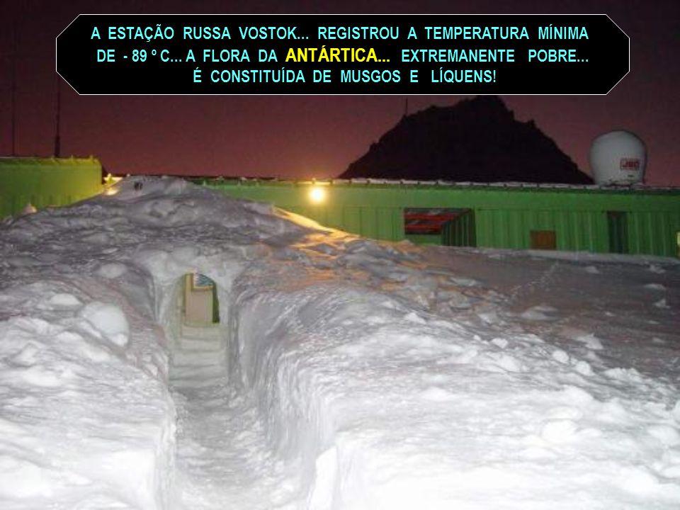 NA ANTÁRTICA SÃO REGISTRADAS AS MAIS BAIXAS TEMPERATURAS DO PLANETA... OS MAIS LONGOS DIAS E NOITES... OS VENTOS MAIS FORTES E ENORMES ONDAS!