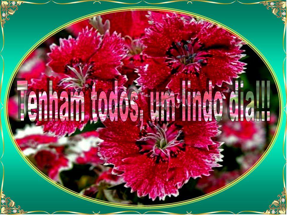 Plantar o bem, através de tudo e de todos, por todos os meios lícitos ao nosso alcance, compreendendo que, se em matéria de colheita Deus pede tempo a