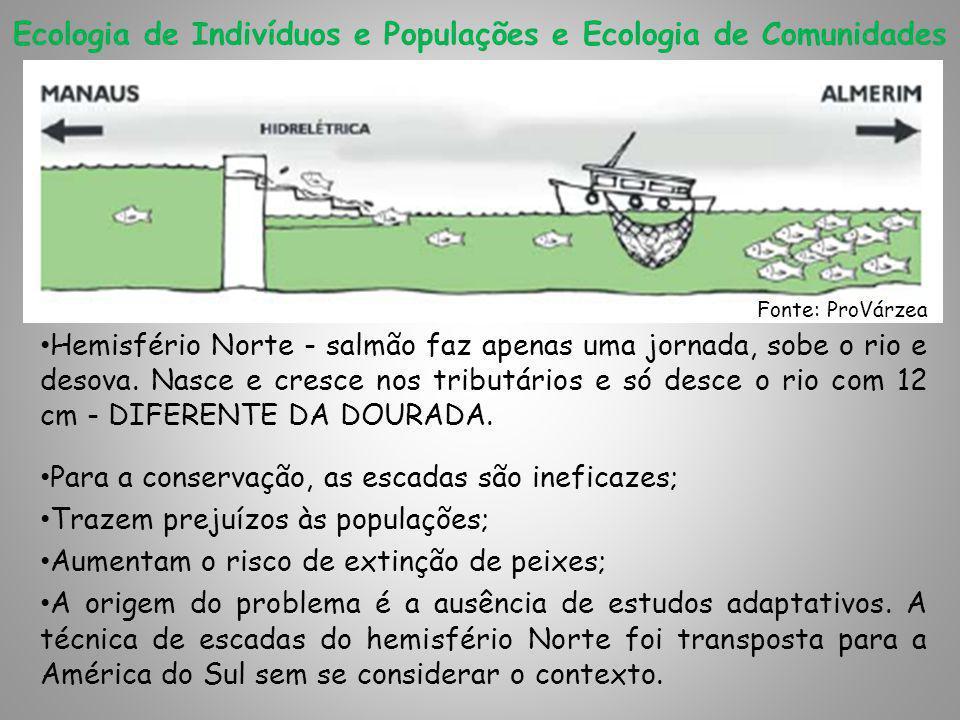Ecologia de Indivíduos e Populações e Ecologia de Comunidades Hemisfério Norte - salmão faz apenas uma jornada, sobe o rio e desova.