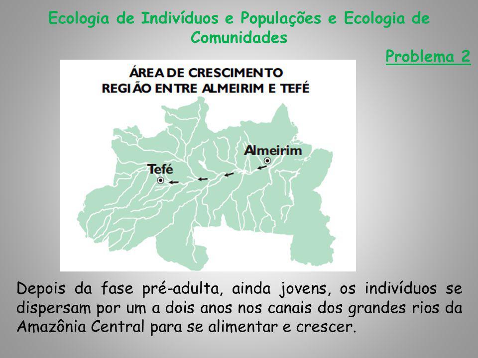Ecologia de Indivíduos e Populações e Ecologia de Comunidades Problema 2 Depois da fase pré-adulta, ainda jovens, os indivíduos se dispersam por um a dois anos nos canais dos grandes rios da Amazônia Central para se alimentar e crescer.