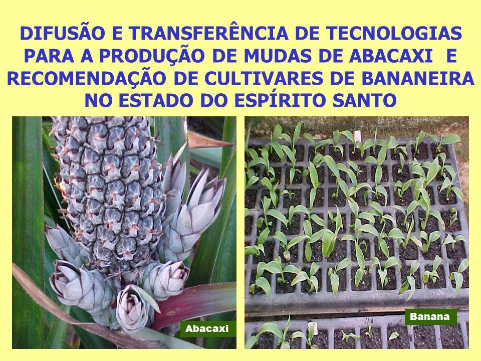 DIFUSÃO E TRANSFERÊNCIA DE TECNOLOGIAS PARA A PRODUÇÃO DE MUDAS DE ABACAXI Operacionalizar, a difusão e transferência de tecnologia para a produção de mudas sadias de abacaxizeiro.