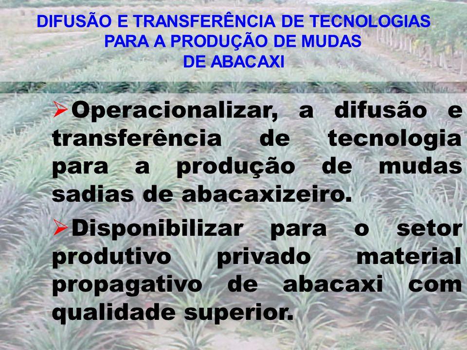 DIFUSÃO E TRANSFERÊNCIA DE TECNOLOGIAS PARA A PRODUÇÃO DE MUDAS DE ABACAXI Operacionalizar, a difusão e transferência de tecnologia para a produção de