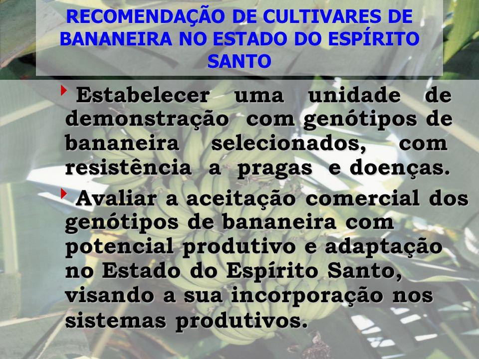 RECOMENDAÇÃO DE CULTIVARES DE BANANEIRA NO ESTADO DO ESPÍRITO SANTO Estabelecer uma unidade de demonstração com genótipos de bananeira selecionados, c