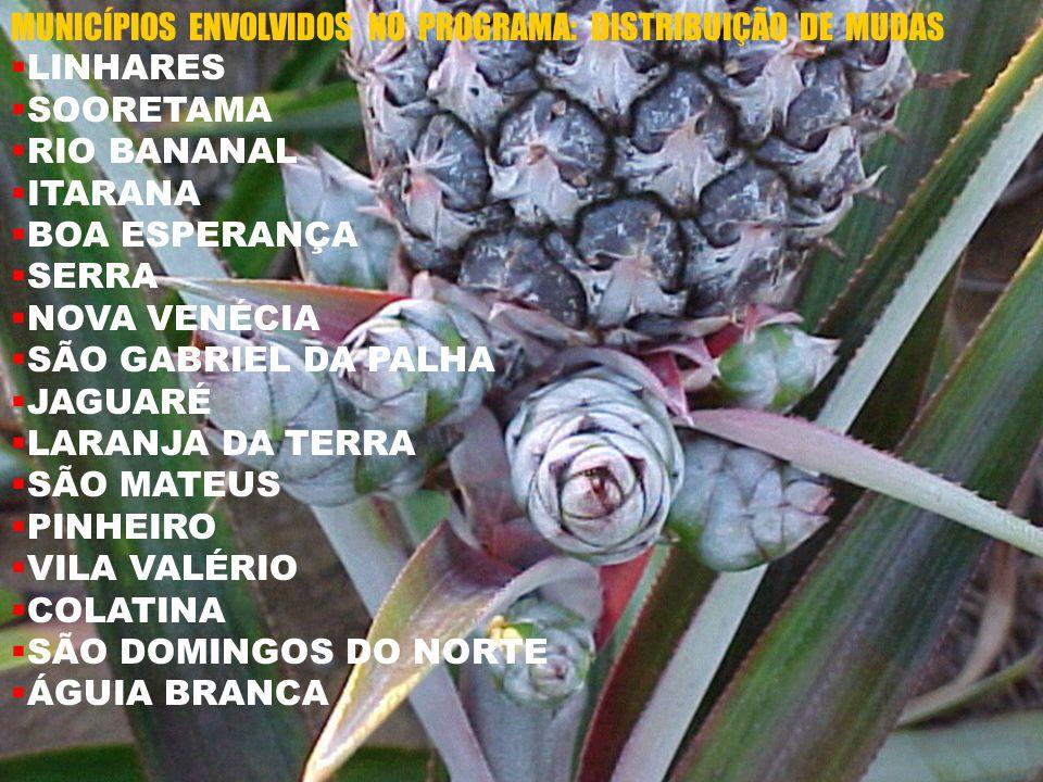 MUNICÍPIOS ENVOLVIDOS NO PROGRAMA: DISTRIBUIÇÃO DE MUDAS LINHARES SOORETAMA RIO BANANAL ITARANA BOA ESPERANÇA SERRA NOVA VENÉCIA SÃO GABRIEL DA PALHA