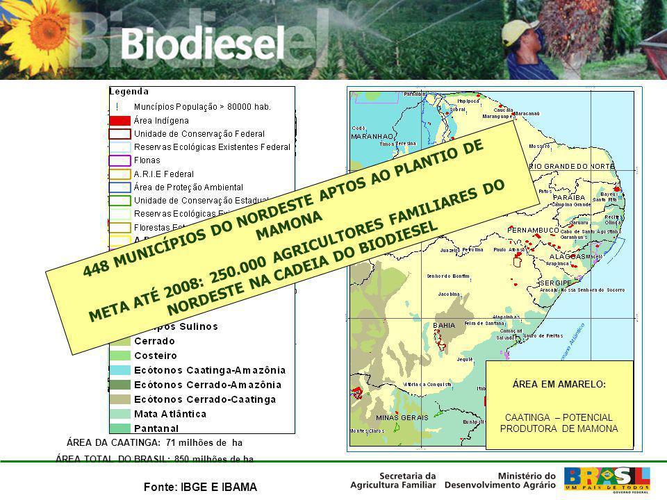 ÁREA DA CAATINGA: 71 milhões de ha ÁREA TOTAL DO BRASIL: 850 milhões de ha Fonte: IBGE E IBAMA 448 MUNICÍPIOS DO NORDESTE APTOS AO PLANTIO DE MAMONA M