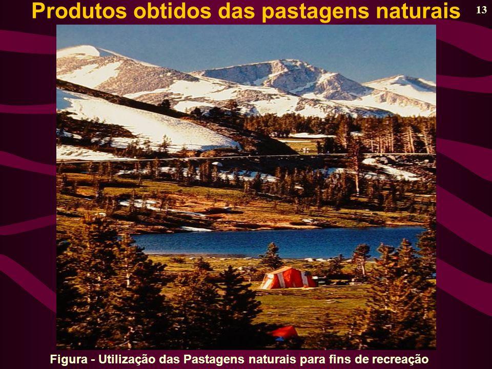 13 Figura - Utilização das Pastagens naturais para fins de recreação Produtos obtidos das pastagens naturais