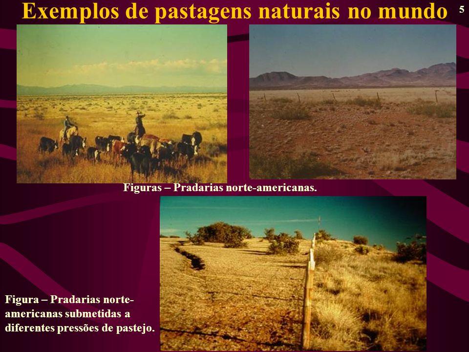 5 Exemplos de pastagens naturais no mundo Figuras – Pradarias norte-americanas.