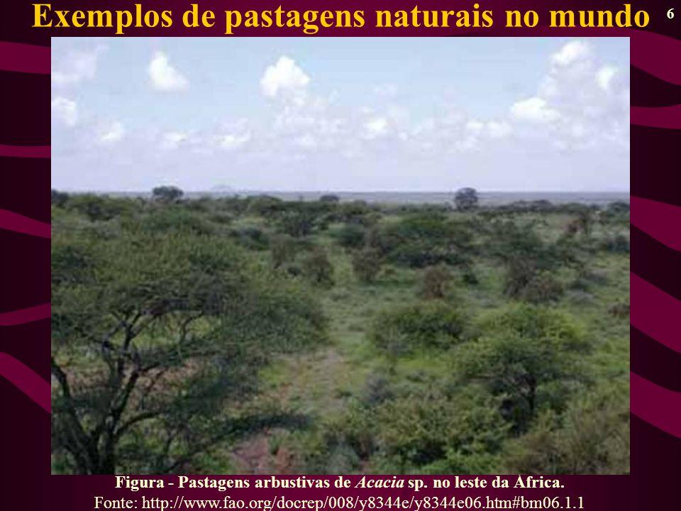 7 Figura - Pastagem nativa rebrotando após queima natural no leste da África Fonte: http://www.fao.org/docrep/008/y8344e/y8344e06.htm#bm06.1.1 Exemplos de pastagens naturais no mundo