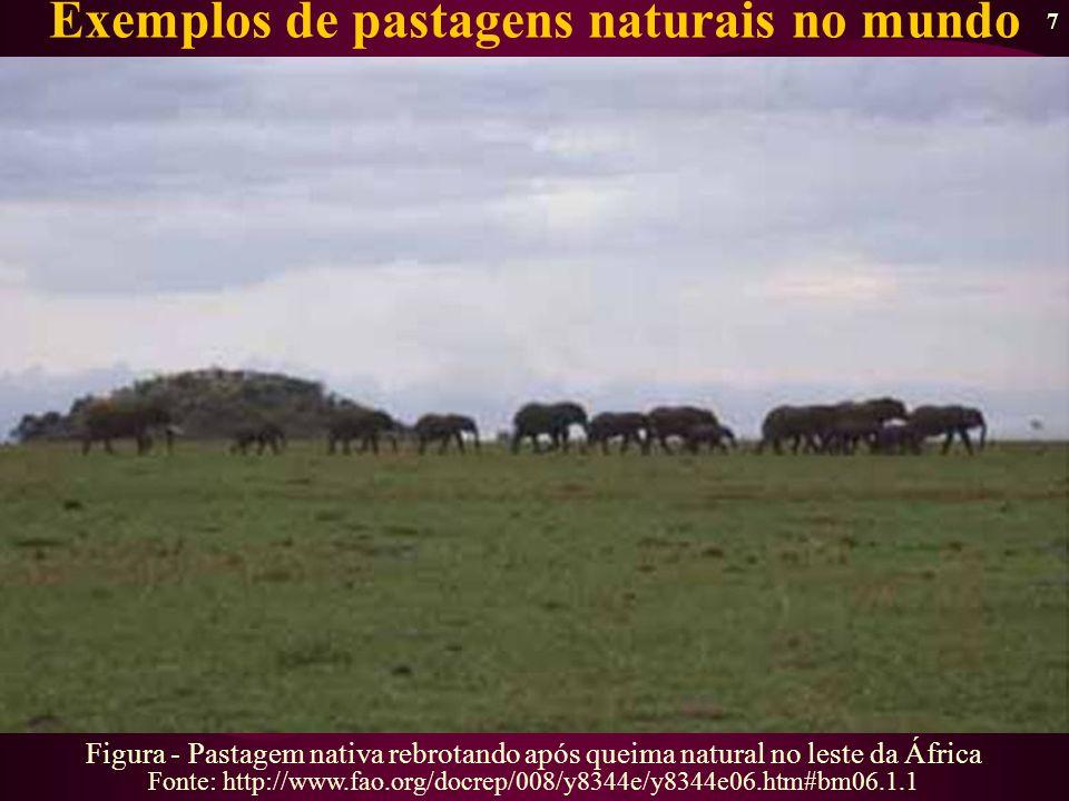 8 (Cortesia de Luis Iniguez, 2004) Exemplos de pastagens naturais no mundo