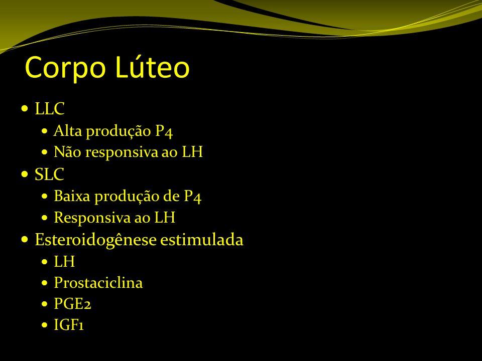 Corpo Lúteo LLC Alta produção P4 Não responsiva ao LH SLC Baixa produção de P4 Responsiva ao LH Esteroidogênese estimulada LH Prostaciclina PGE2 IGF1
