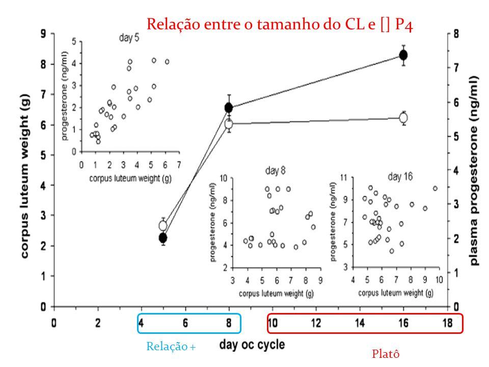 Relação entre o tamanho do CL e [] P4 Platô Relação +