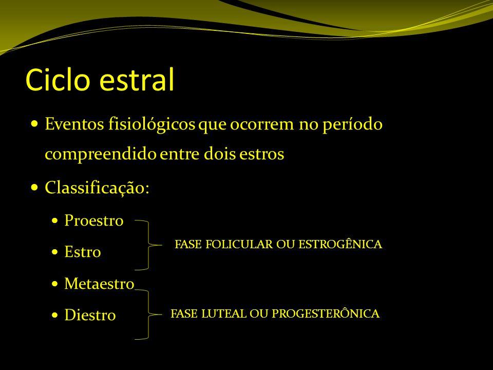 Ciclo estral Eventos fisiológicos que ocorrem no período compreendido entre dois estros Classificação: Proestro Estro Metaestro Diestro FASE FOLICULAR