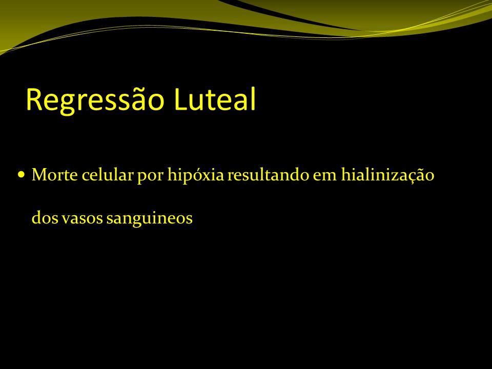 Regressão Luteal Morte celular por hipóxia resultando em hialinização dos vasos sanguineos