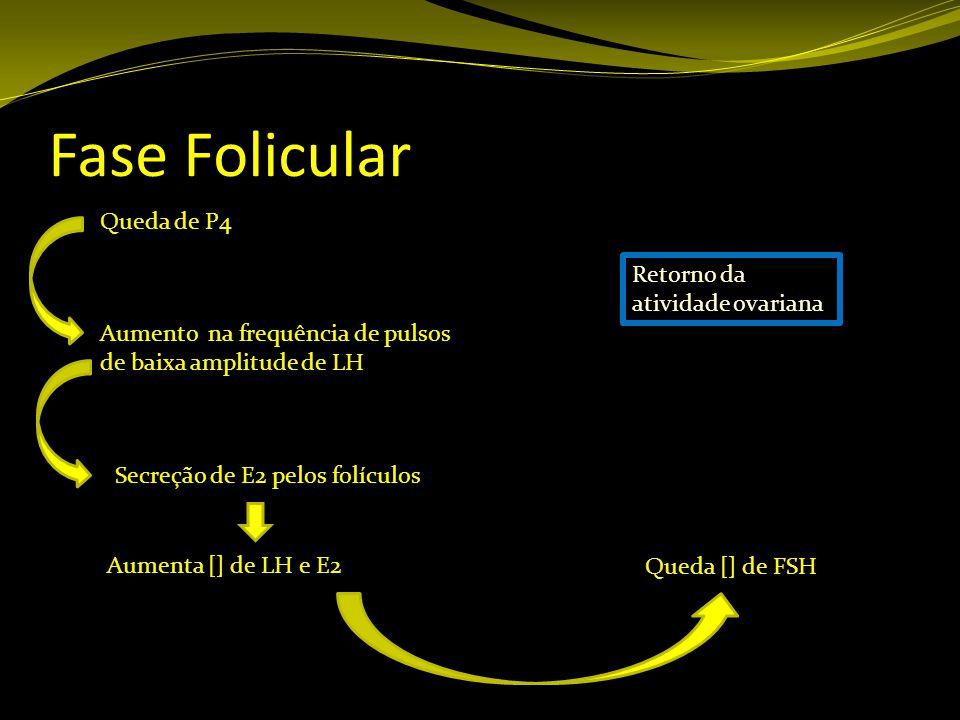 Fase Folicular Queda de P4 Aumento na frequência de pulsos de baixa amplitude de LH Secreção de E2 pelos folículos Aumenta [] de LH e E2 Queda [] de F