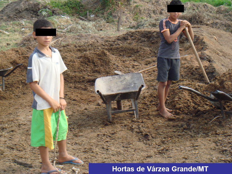 Hortas de Várzea Grande/MT
