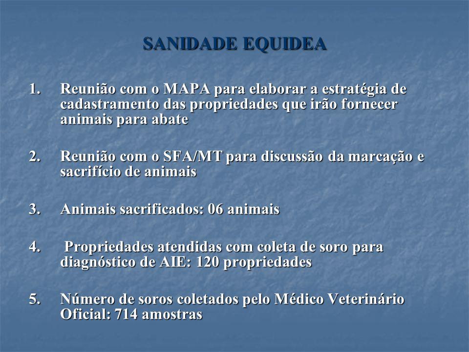 SANIDADE EQUIDEA 1.Reunião com o MAPA para elaborar a estratégia de cadastramento das propriedades que irão fornecer animais para abate 2.Reunião com