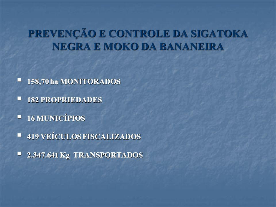 PREVENÇÃO E CONTROLE DA SIGATOKA NEGRA E MOKO DA BANANEIRA 158,70 ha MONITORADOS 158,70 ha MONITORADOS 182 PROPRIEDADES 182 PROPRIEDADES 16 MUNICÍPIOS
