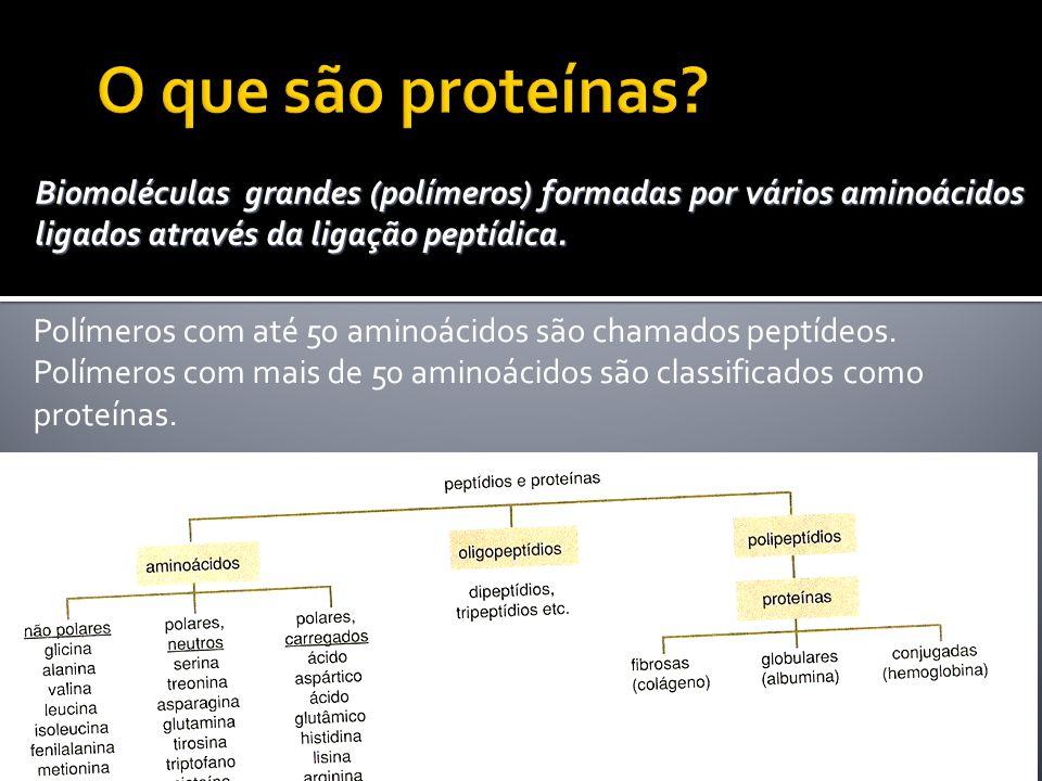 1- estrutura primária – corresponde à seqüência de aminoácidos.