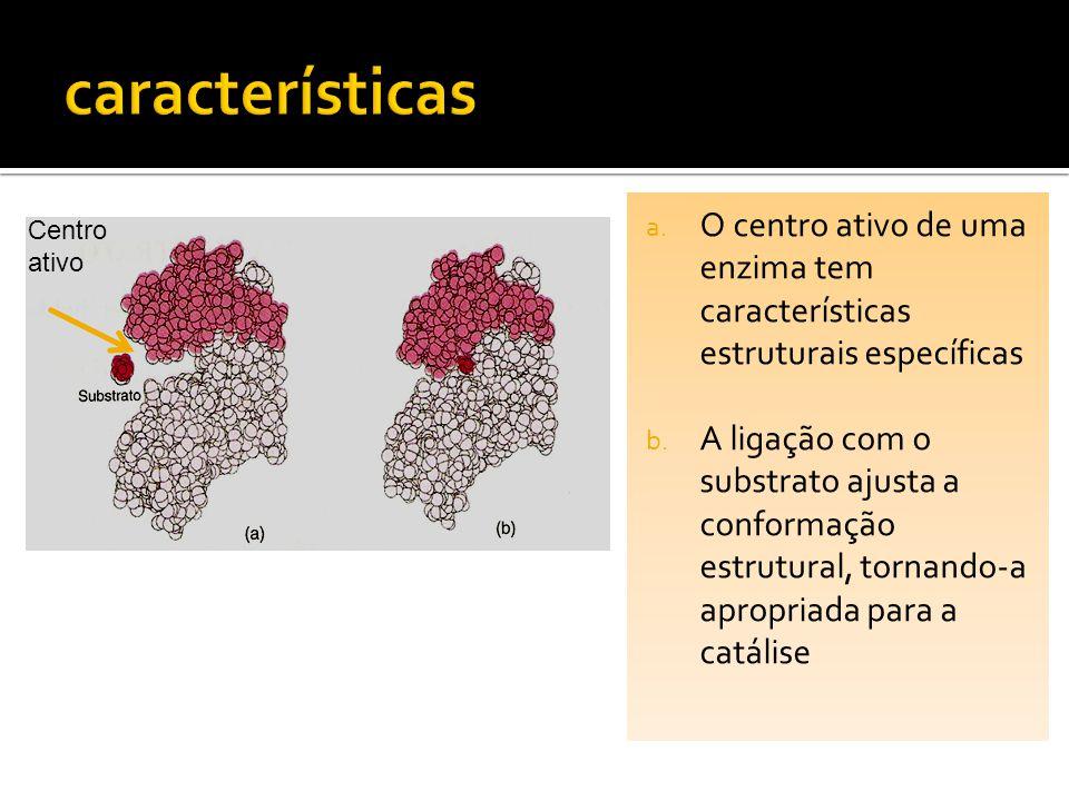 a. O centro ativo de uma enzima tem características estruturais específicas b. A ligação com o substrato ajusta a conformação estrutural, tornando-a a