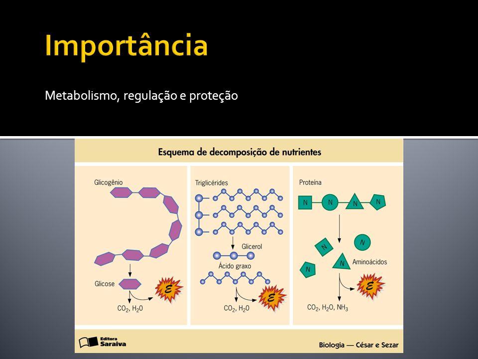 Metabolismo, regulação, proteçmão Metabolismo, regulação e proteção