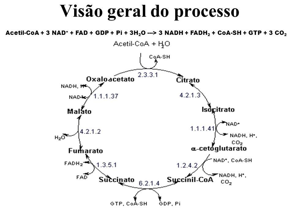 Acetil-CoA + 3 NAD + + FAD + GDP + Pi + 3H 2 O ---> 3 NADH + FADH 2 + CoA-SH + GTP + 3 CO 2 Visão geral do processo