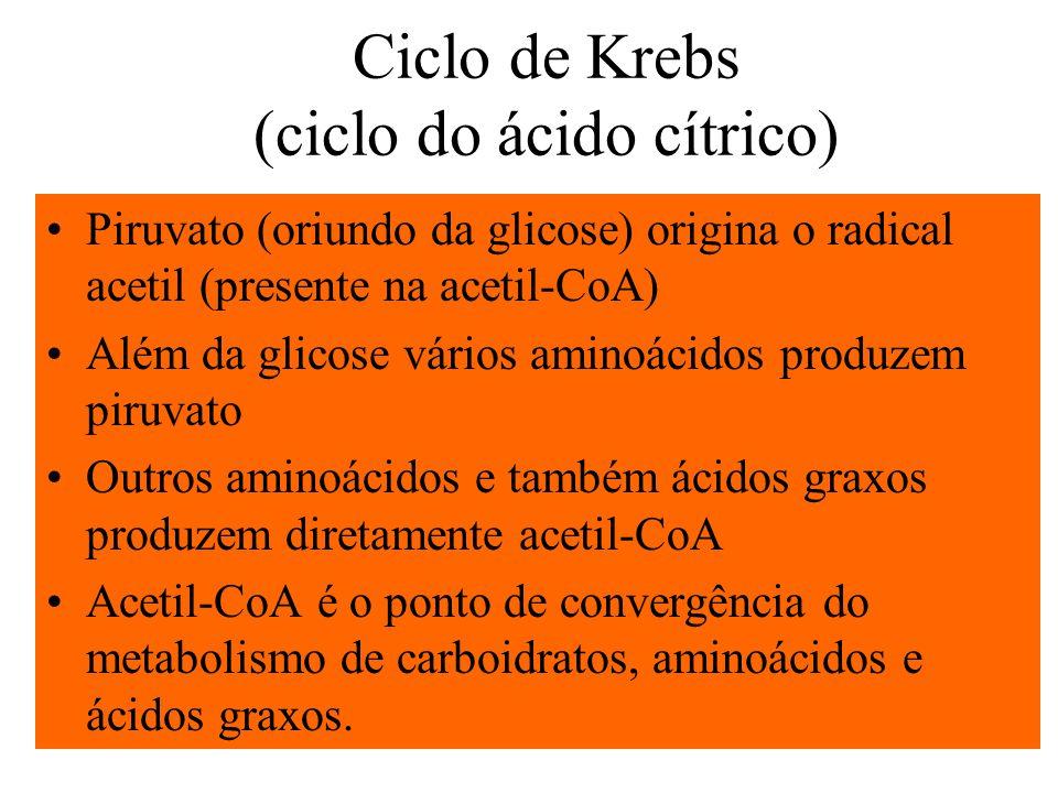Ciclo de Krebs (ciclo do ácido cítrico) Piruvato (oriundo da glicose) origina o radical acetil (presente na acetil-CoA) Além da glicose vários aminoác