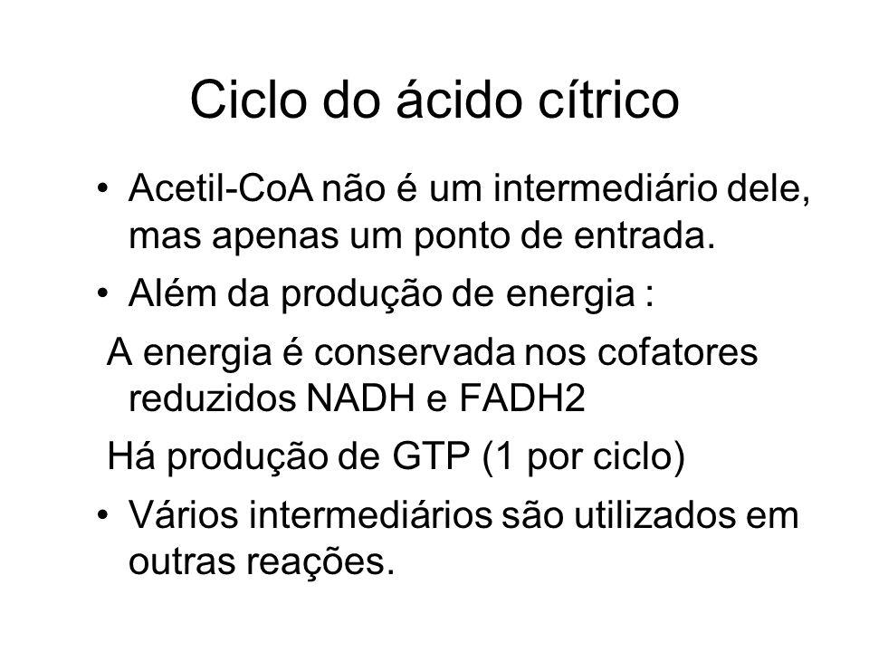 Ciclo do ácido cítrico Acetil-CoA não é um intermediário dele, mas apenas um ponto de entrada. Além da produção de energia : A energia é conservada no