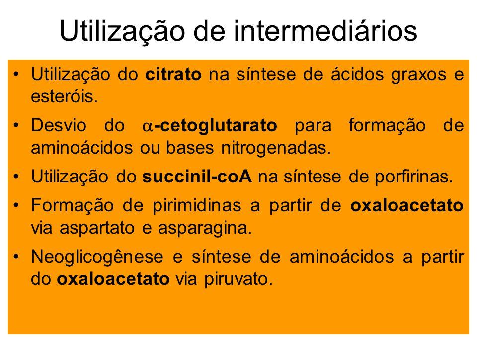 Utilização de intermediários Utilização do citrato na síntese de ácidos graxos e esteróis. Desvio do -cetoglutarato para formação de aminoácidos ou ba