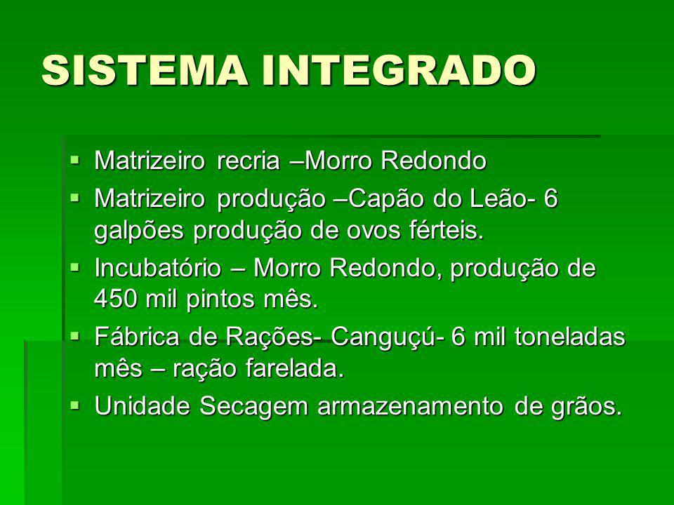 SISTEMA INTEGRADO Matrizeiro recria –Morro Redondo Matrizeiro recria –Morro Redondo Matrizeiro produção –Capão do Leão- 6 galpões produção de ovos fér